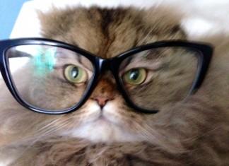 blog-bonlook-lunettes