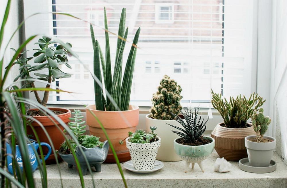 8 bonnes raisons pour d corer ta maison avec des plantes. Black Bedroom Furniture Sets. Home Design Ideas